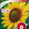 Sunflower 'Zebulon'-thumbnail
