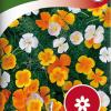 California Poppy-thumbnail