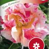 California Poppy 'Rosa Romantica'-thumbnail