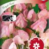 Sweet pea 'Royal Rose'-thumbnail