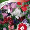 Sweet pea 'Royal mix'-thumbnail
