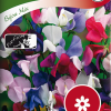 Sweet pea 'Bijou mix'-thumbnail