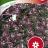 Tuoksupielus 'Violett Queen'-thumbnail