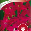 Nicotiana Sanderae 'Crimson Bedder'-thumbnail