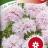 Unikko 'Lilac Pompom'-thumbnail