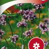 Verbena bonariensis-thumbnail