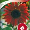 Sunflower 'Ruby F1'-thumbnail