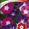 Ipomoea purpurea 'Bohemian Shades'-thumbnail