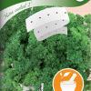 Persilja 'Moss Curled 2'-thumbnail