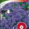 Heliotropium 'Marine'-thumbnail