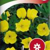 Oenothera macrocarpa-thumbnail