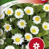 Bellis perennis 'Meadow Daisy'-thumbnail