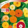 Calendula officinalis 'Fiesta Gitana'-thumbnail