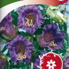 Cobaea scandens-thumbnail