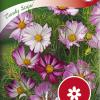 Cosmos bipinnatus 'Candy Stripe'-thumbnail