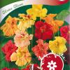 Garden nasturtium 'Glorius Gleam'-thumbnail