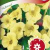 Garden nasturtium 'Milkmaid'-thumbnail