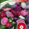 Callistephus 'Dwarf Chrysanthemum mix'-thumbnail