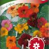 Garden nasturtium 'Out of Africa'-thumbnail