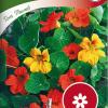 Garden nasturtium 'Tom Thumb'-thumbnail