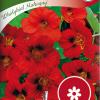 Garden nasturtium 'Whirlybird Mahogny'-thumbnail