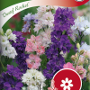 Consolida orientalis var. hyacinthiflora 'Dwarf Rocket'-thumbnail