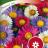 Kiinanasteri 'Chinensis mix'-thumbnail