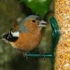 Lintujen ruokinta-thumbnail