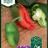 Chilipaprika 'Padron' -thumbnail