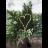 Star LED Decoration Heart koristesydän-thumbnail