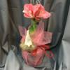 Jouluinen amaryllis-thumbnail