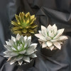Christmas arrangement of succulent plant-thumbnail
