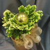 Lesser clubmoss Christmas arrangement-thumbnail