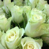 Bouquet of white roses-thumbnail