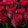 Bouquet of red roses-thumbnail