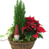 Christmas flower arrangement of poinsettia-thumbnail