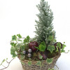 Christmas flower arrangement of hyacinth and cypress-thumbnail