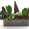Hyacinth arrangement of your choice-thumbnail
