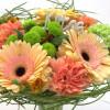 Peachy flower field-thumbnail