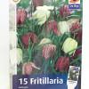 Fritillaria Mix-thumbnail