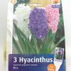 Hyacinth Mix-thumbnail