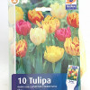 Tulips Mix-thumbnail