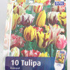 Tulips Mix Rembrandt-thumbnail