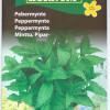 Peppermint-thumbnail