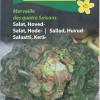 Head lettuce 'Merveille des quatre Saisons'-thumbnail