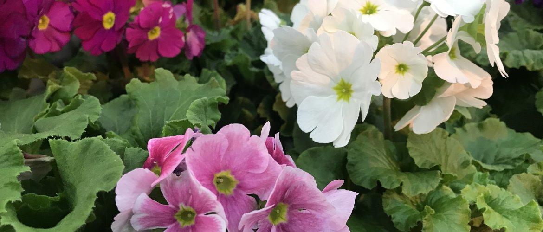 Kevättä Ilmassa!-thumbnail