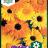 Calendula officinalis 'Daisy Citrus mix'-thumbnail
