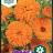 Calendula officinalis 'Orange Porcupine'-thumbnail