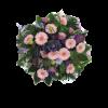 Pyöreä surulaite-thumbnail