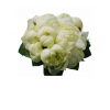 Bridal bouquet of peonies-thumbnail